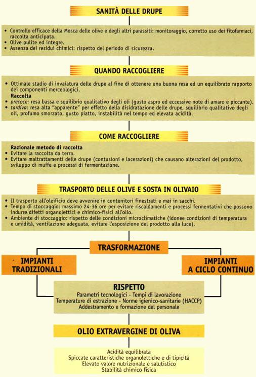 Migliorare la qualit cooperativa agricola olearia for Raccolta olive periodo